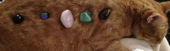 A Perfect Guide For Crystal Healing For Pets