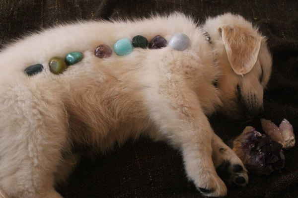 A Dog Get Relaxing While In Crystal Therapy Which Representing Crystal Therapy For Animals Concept.