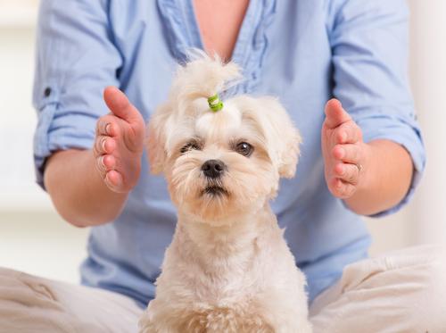 A Dog Getting Reiki Healing.