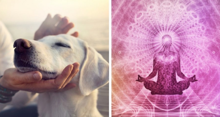 Impact of Reiki Healing For Human And Dog.